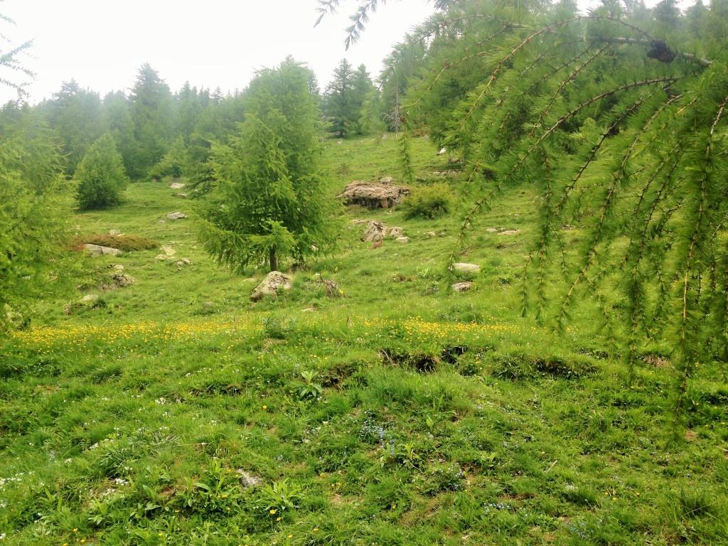 Trouver le Chevreuil dans le Vallon de Fontanalbe