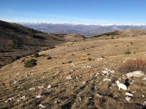 Cime du Cheiron au départ de Gréolières les neiges (15)