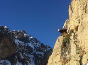 Ski-de-randonnee-guilie-agnel (1)